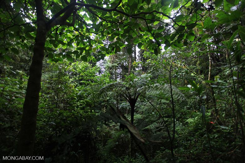 Arfak cloud forest
