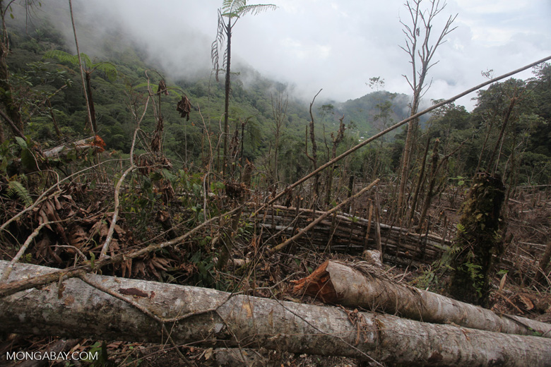 Forest clearing in the Arfak mountains