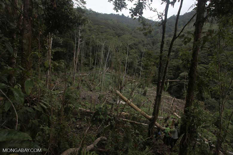 Swidden agriculture in New Guinea