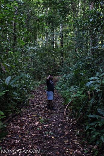 Bird watching guide in New Guinea