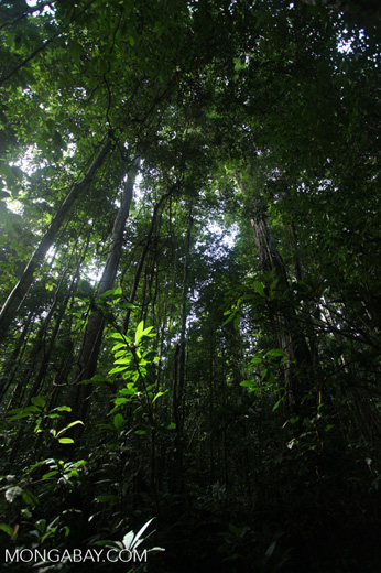 Lowland jungle in New Guinea