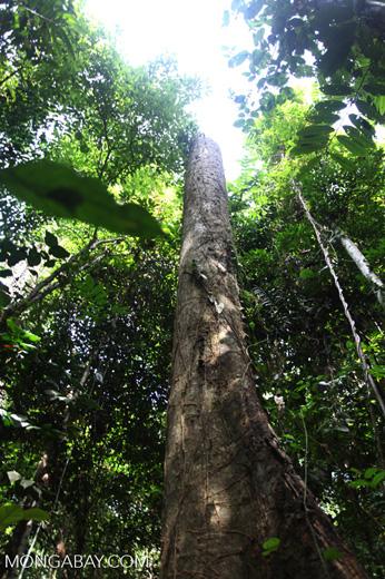 Rainforest tree stump