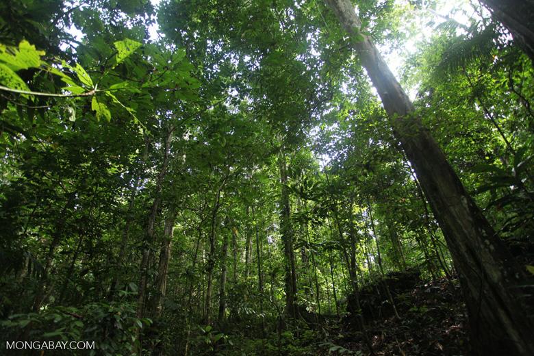 Cave in a New Guinea rainforest