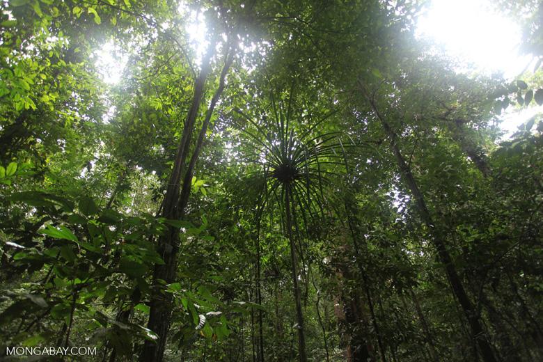New Guinea rainforest
