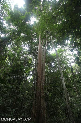 New Guinea jungle