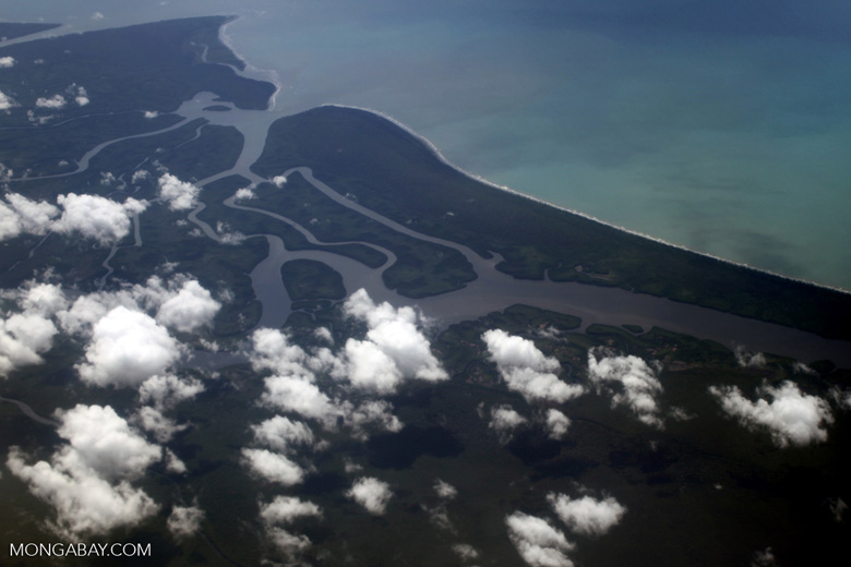Aerial view of a jungle river delta in New Guinea