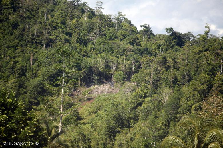 Forest clearing near Manokwari