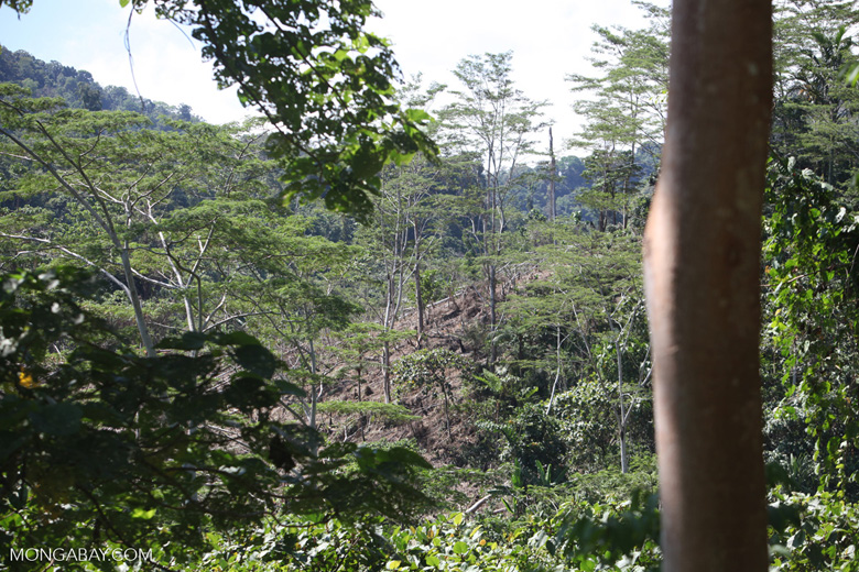 Deforestation outside of Manokwari