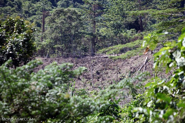 Deforestation outside of Manokwari