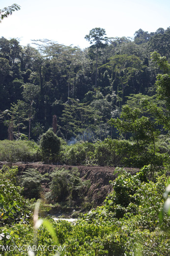 Exhaust rising from a bulldozer clearing forest outside Manokwari
