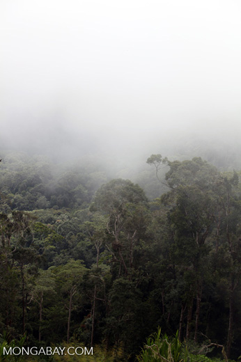 Fog over the Arfak rainforest