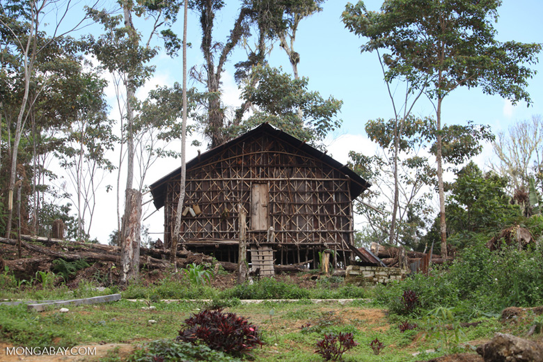 Traditional arfakpeople house