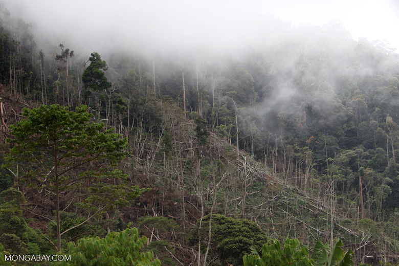 Deforestation near Mokwam, West Papua