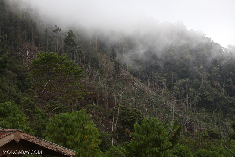 Deforestation near Mokwam, West Papua