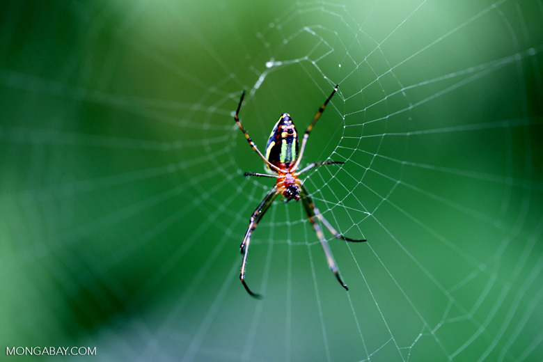 Orange, yellow, green, and black orb spider