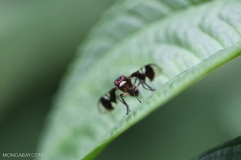 Strange flying insect