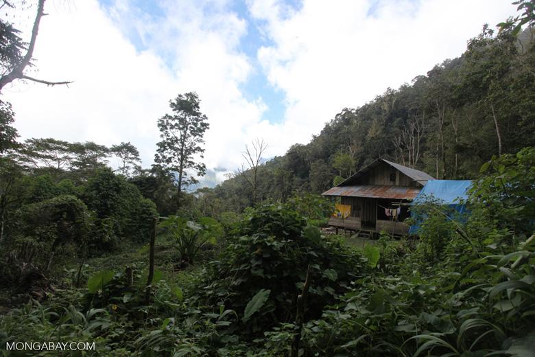 Birdwatching hut in West Papua