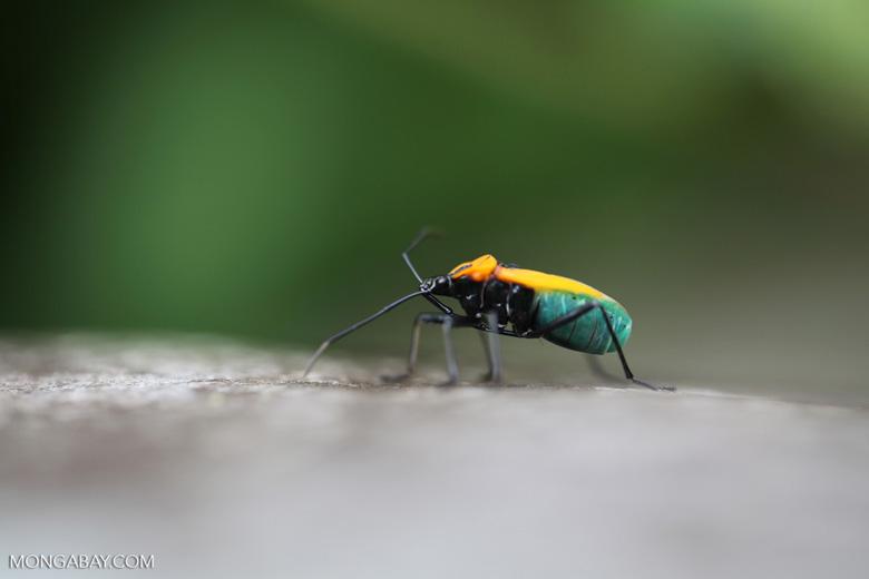 Orange, turquoise, and black bug