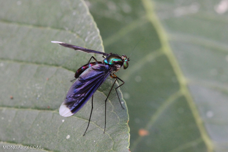 Blue, green, purple, and red fly