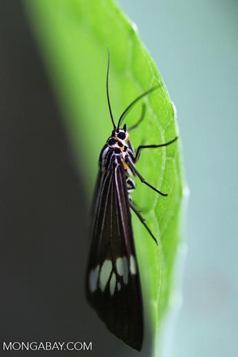 Black, white, orange, and yellow moth