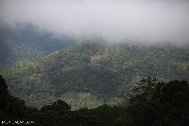 Smallholder deforestation for swidden agriculture in the Arfak mountains