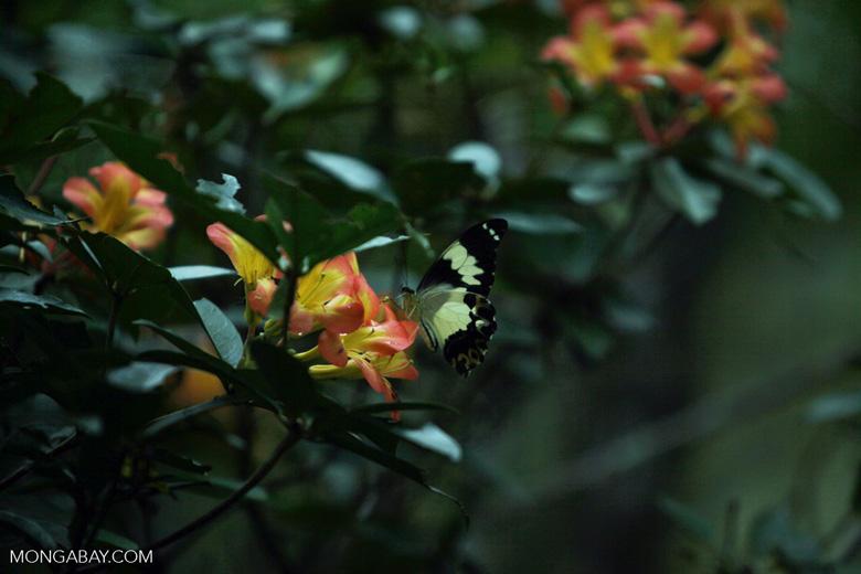 Butterfly feeding on flowers