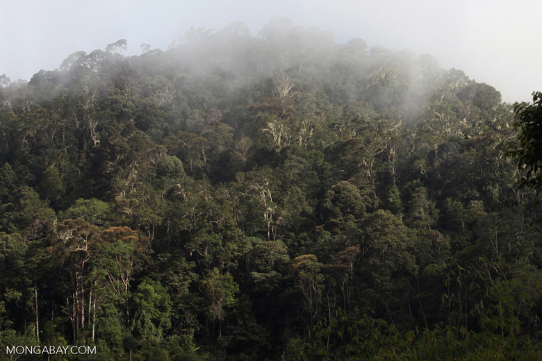 Arfak rainforest