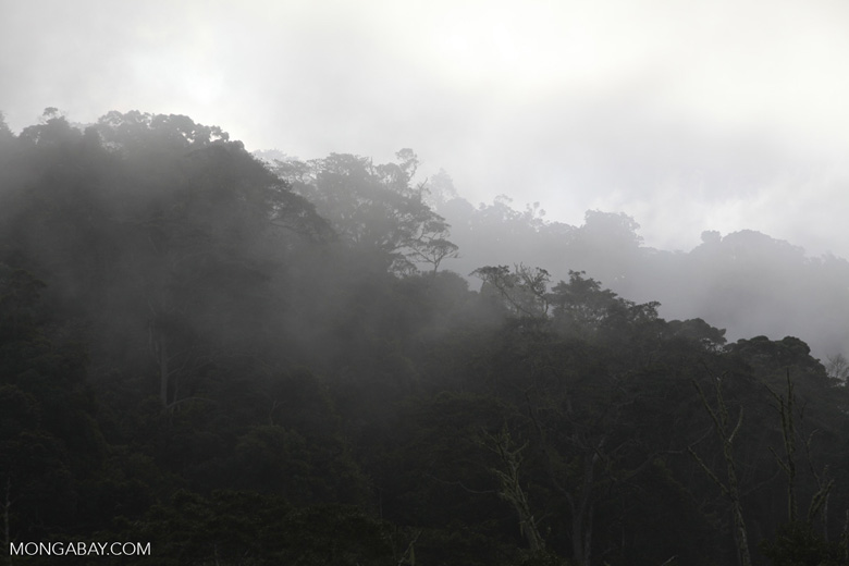 Mist rising from the rainforest