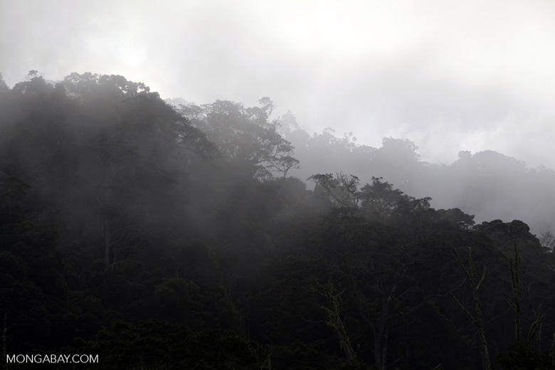 Transpiration in the rainforest