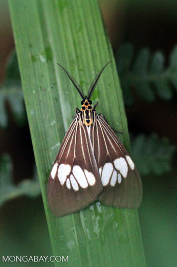 Black moth with white, orange, yellow, and green markings