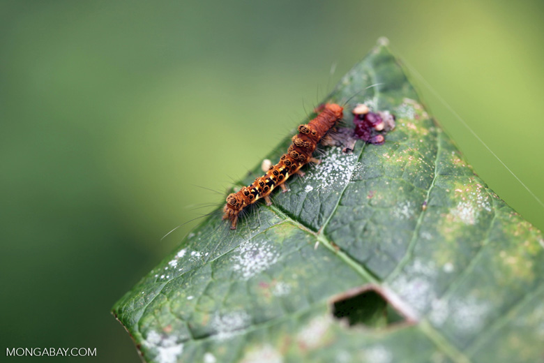 Orange, yellow, and black caterpillar