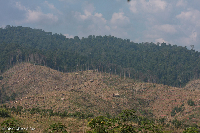 The impact of deforestation