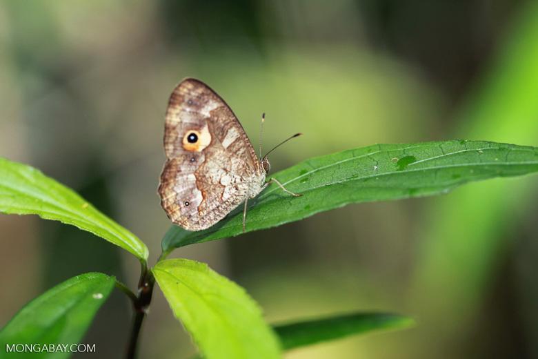 Butterfly [madagascar_0726]