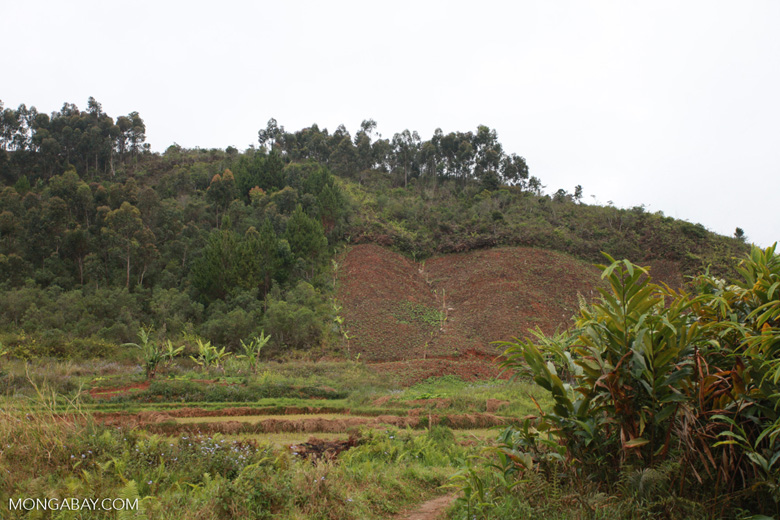 Clearing for agriculture near Mantadia