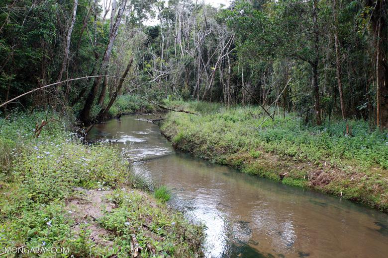 Forest killed by mine pollution [madagascar_0882]
