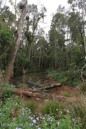 Forest killed by mine pollution [madagascar_0886]