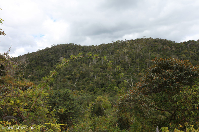 Mantadia rainforest [madagascar_0957]