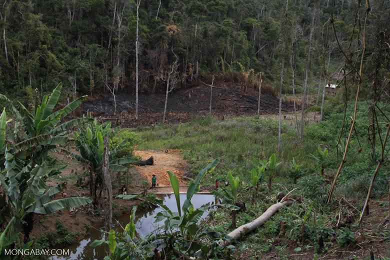 Small village near Mantadia; slash-and-burn (tavy) agriculture [madagascar_0969]