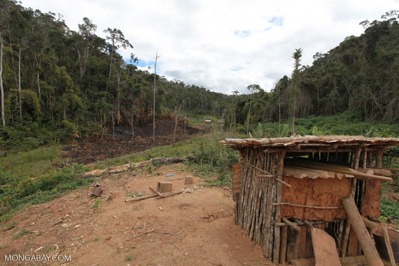 Small village near Mantadia; slash-and-burn (tavy) agriculture [madagascar_0974]