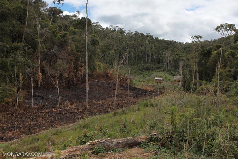 Tavy or slash-and-burn agriculture in Madagascar [madagascar_0978]