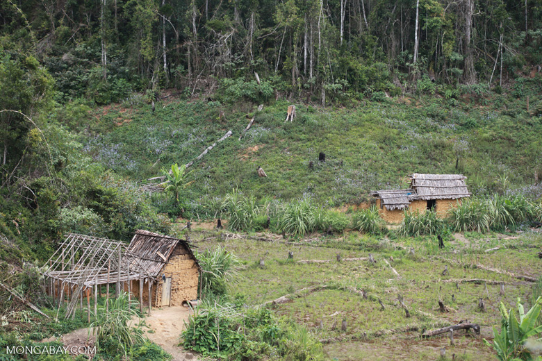 Forest clearing near Mantandia [madagascar_1006]