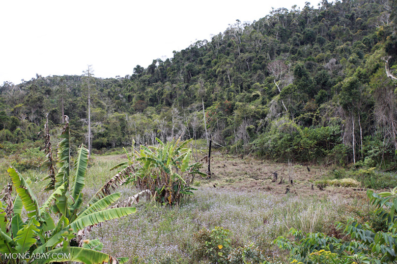 Forest clearing near Mantandia [madagascar_1025]