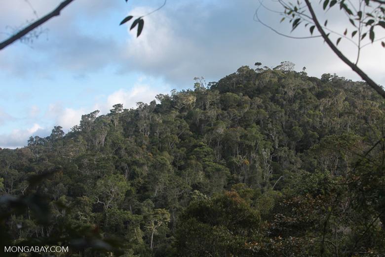 Mantadia rainforest [madagascar_1133]