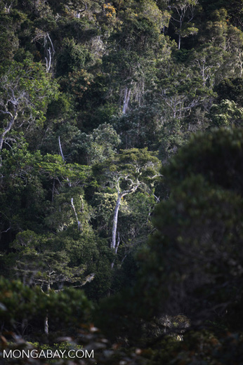 Mantadia rain forest [madagascar_1138]