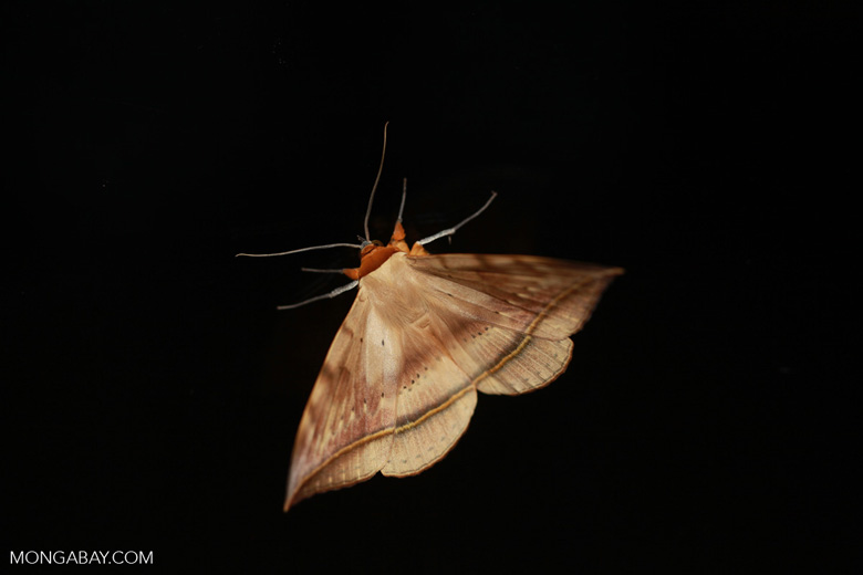 Moth [madagascar_1648]