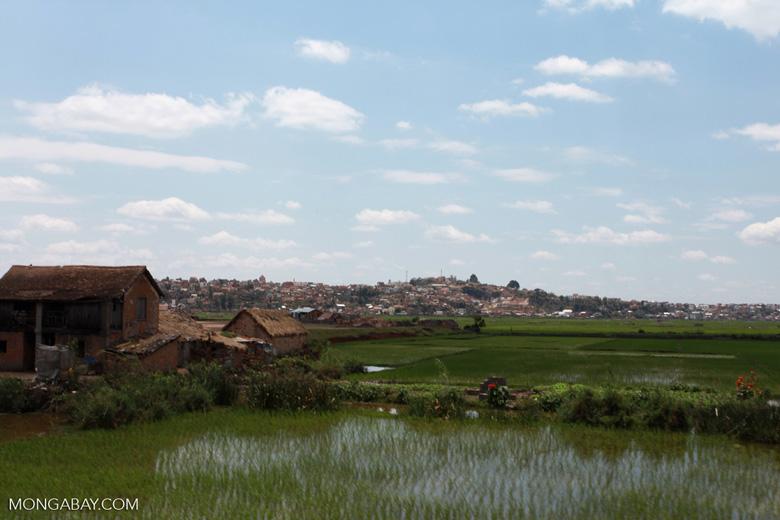 Rice fields of Tana [madagascar_1698]