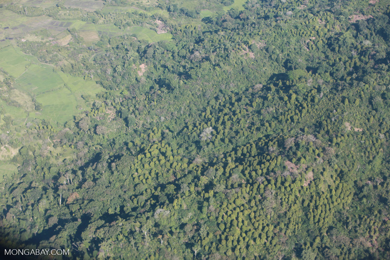 Aerial view of deforestation and plantation trees in Madagasar
