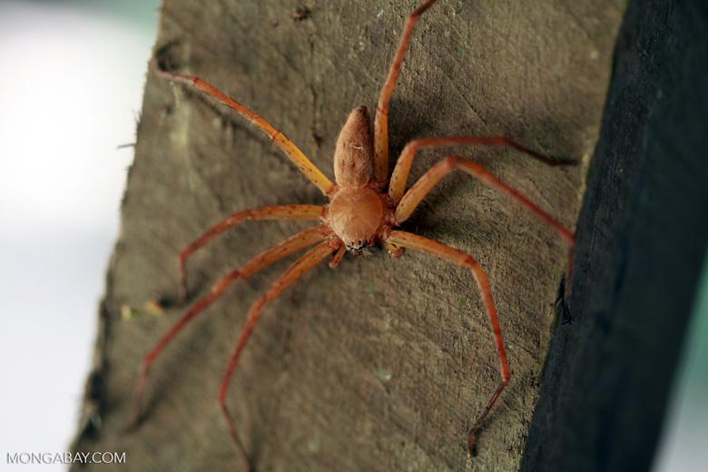 Spider [madagascar_2013]