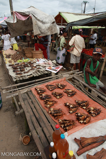 Fish for sale in the Maroantsetra market
