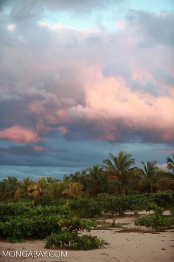 Beach palms at sunrise [madagascar_2228]